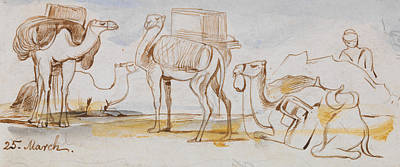Drawing - Camels by Edward Lear