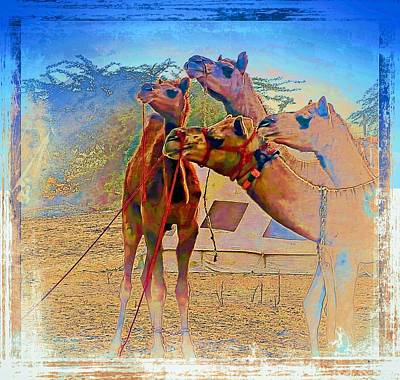 Photograph - Camels Hanging Out India Rajasthan Desert 6a by Sue Jacobi