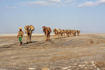 Photograph - A Man Leads His Camels To Market by Aidan Moran