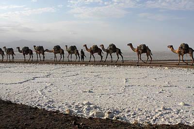 Camels Of The Salt Flats Art Print