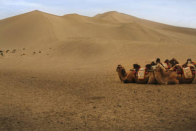 Photograph - Camels Of The Silk Route by Jed Holtzman
