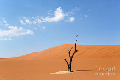 Camelthorn Tree In Sossusvlei, Namibia Art Print by Julia Hiebaum