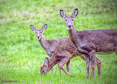 Photograph - Camera Deer by LeeAnn McLaneGoetz McLaneGoetzStudioLLCcom