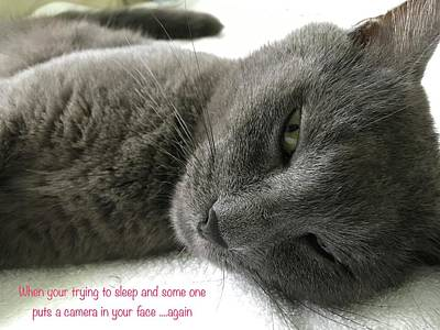 Photograph - Resting Face by Debbie Cundy