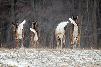Photograph - Camera Shy by Gary Hall
