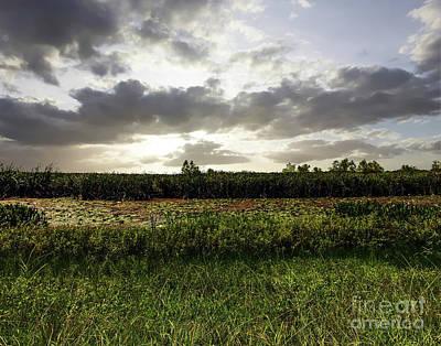 Photograph - Cameron Prairie Wetlands by Ken Frischkorn
