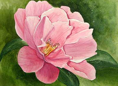 Painting - Camilia by Sherri Bails