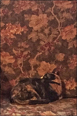 Photograph - Camo Cat by Pamela Showalter
