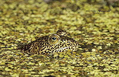 Photograph - Camo Frog by Mike Fitzgerald