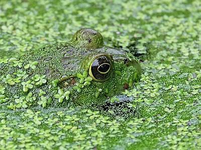 Camo Frog Art Print by Ronda Ryan