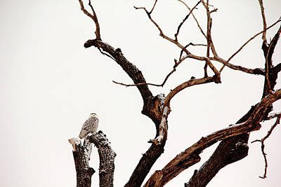 Photograph - Camouflage by Debbie Oppermann