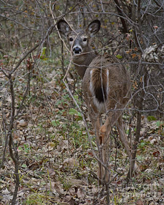 Photograph - Camouflage Deer by Kathy M Krause