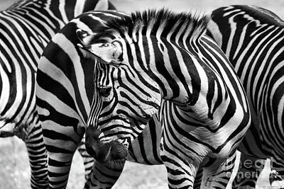 Photograph - Camouflage In Black And White by Sandra Huston