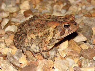 Photograph - Camouflage Toad by Brett Winn
