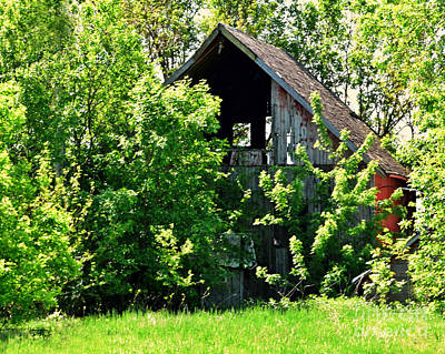Photograph - Camouflaged Barn by Kathy M Krause