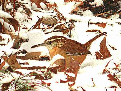 Photograph - Camouflaged Carolina Wren by Joe Duket