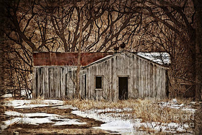 Photograph - Camouflaged Wood Shed by Kathy M Krause