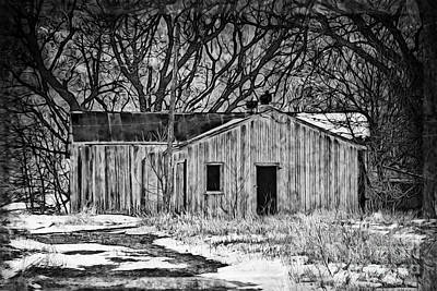 Photograph - Camouflaged Wood Shed Two by Kathy M Krause