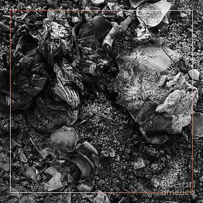 Photograph - Campfire Debris 6 by Paul Davenport