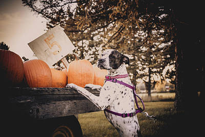 Photograph - Can We Buy A Pumpkin by Jeanette Fellows