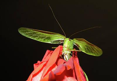 Grasshopper Photograph - Can You Hear Me Now By Karen Wiles by Karen Wiles