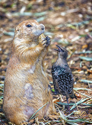 Starlings Digital Art - Can You Spare A Nut? by Bill Tiepelman