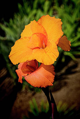 Canna Photograph - Cana Lily 2 Mission Bay by Kenneth Roberts
