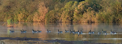 Photograph - Canada Geese 4491-012818-1cr by Tam Ryan