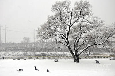 Photograph - Canada Geese by Andrew Dinh