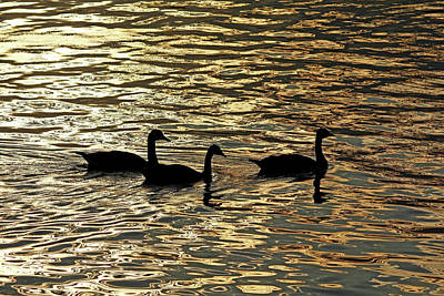 Photograph - Canada Geese At Sunrise by Debbie Oppermann