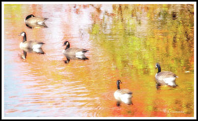 Photograph - Canada Geese, Autumn Stream by A Gurmankin