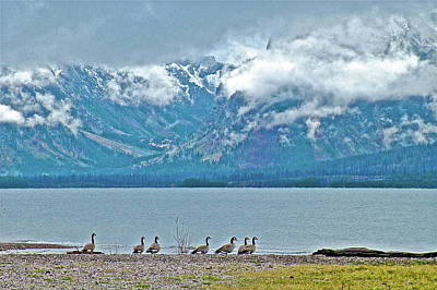 Photograph - Canada Geese By Jackson Lake, Grand Tetons National Park, Wyoming  by Ruth Hager