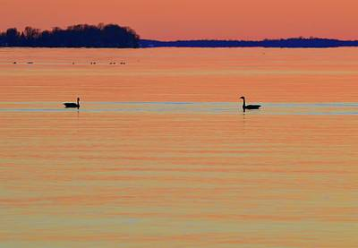 Photograph - Canada Geese In The Early Morning In April  by Lyle Crump