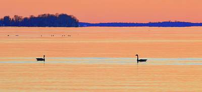 Photograph - Canada Geese In The Early Morning In April Three  by Lyle Crump