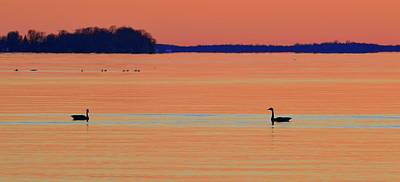 Photograph - Canada Geese In The Early Morning In April Two  by Lyle Crump