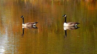 Photograph - Canada Geese On Lake Padden by Karen Molenaar Terrell