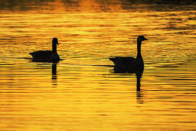 Photograph - Canada Geese Sunse Silhouette by Vishwanath Bhat