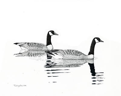 Drawing - Canada Geese by Timothy Livingston
