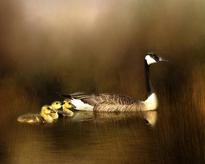 Photograph - Canada Goose And Goslings by TnBackroadsPhotos