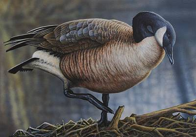 Waterfowl Painting - Canada Goose by Anthony J Padgett