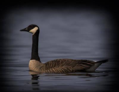 Canada Goose Original by Chris Dzierzewski