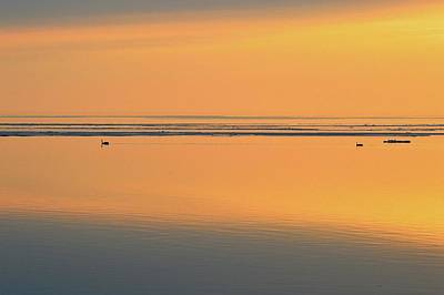 Digital Art - Canada Goose Couple Swimming At Sunrise 2  by Lyle Crump
