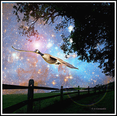 Photograph - Canada Goose Flies On Starry Night by A Gurmankin NASA