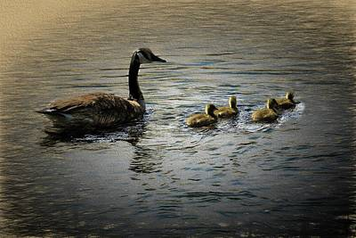 Digital Art - Canada Goose Four Goslings. by Rusty R Smith
