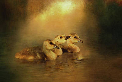 Digital Art - Canada Goose Goslings by TnBackroadsPhotos