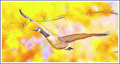 Photograph - Canada Goose In Flight, Digital Art by A Gurmankin