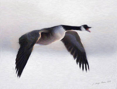 Digital Art - Canada Goose by JGracey Stinson