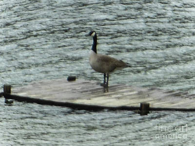 Canada Goose Lake Dock Art Print
