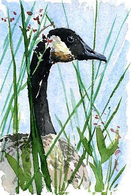 Waterfowl Painting - Canada Goose Looking by John D Benson