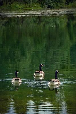 Photograph - Canada Goose Trifecta by Kendall McKernon